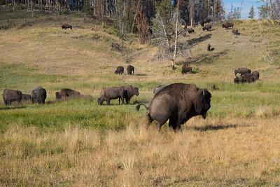 Bison Business