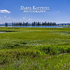 The wetlands/meadow area adjacent to Lake Yellowstone are such a deep, nearly glowing, green color.   Lake Yellowstone, the largest alpine lake in the world, isbehind the trees
