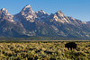 Offering incredible westward views of the Grand Tetons through the high plains in western Wyoming, Antelope Flats Road runs east to west through sagebrush flats. It's not unusual to spot wildlife such as bison, antelope and moose along this six-mile stretch.