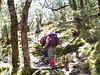 Treking through moss forest !