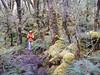 Goblin Moss