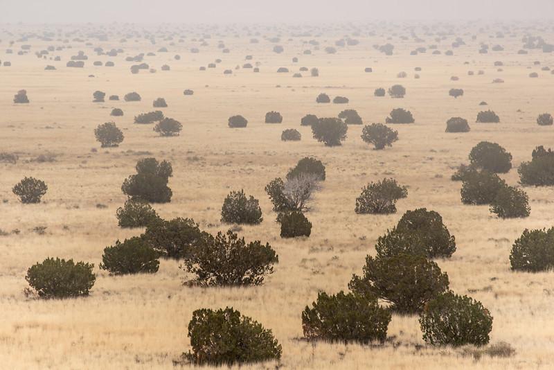 Foggy Plain