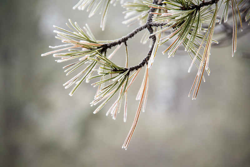 Cold Needles