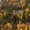 Fall Color Aspens III