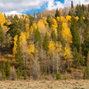 Fall Color Aspens II
