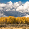 Aspen Trees and Clouds