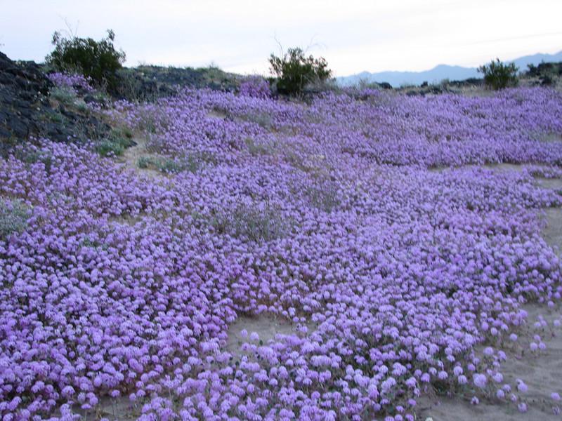 A flowing sea of purple.