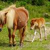 Wild Ponies