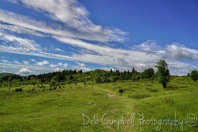 Appalachian Trail to Massie Gap