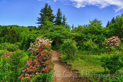 Trail at Massie Gap
