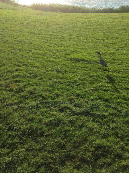 I came across this heron while running