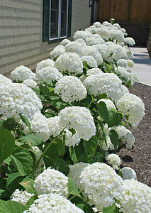 Flowers in the Front of the Carriage House of the Cranwell Resort, Spa, and Golf Club