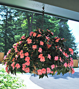 Hanging Basket at the Carriage House at the Cranwell Resort, Spa, and Golf Club