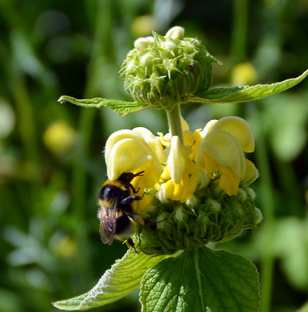 Bee in the Garden at Washingford House