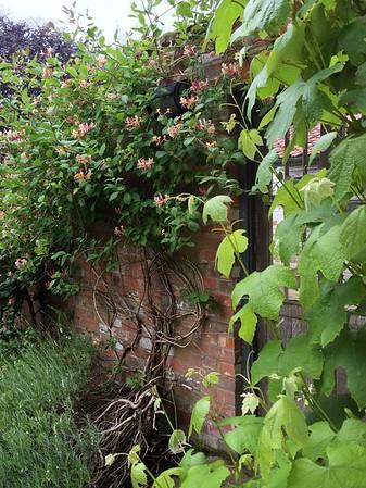 Garden at Washingford House