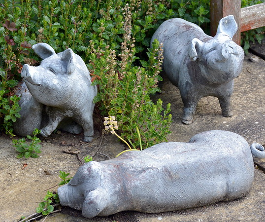 Garden Pigs at Washingford House
