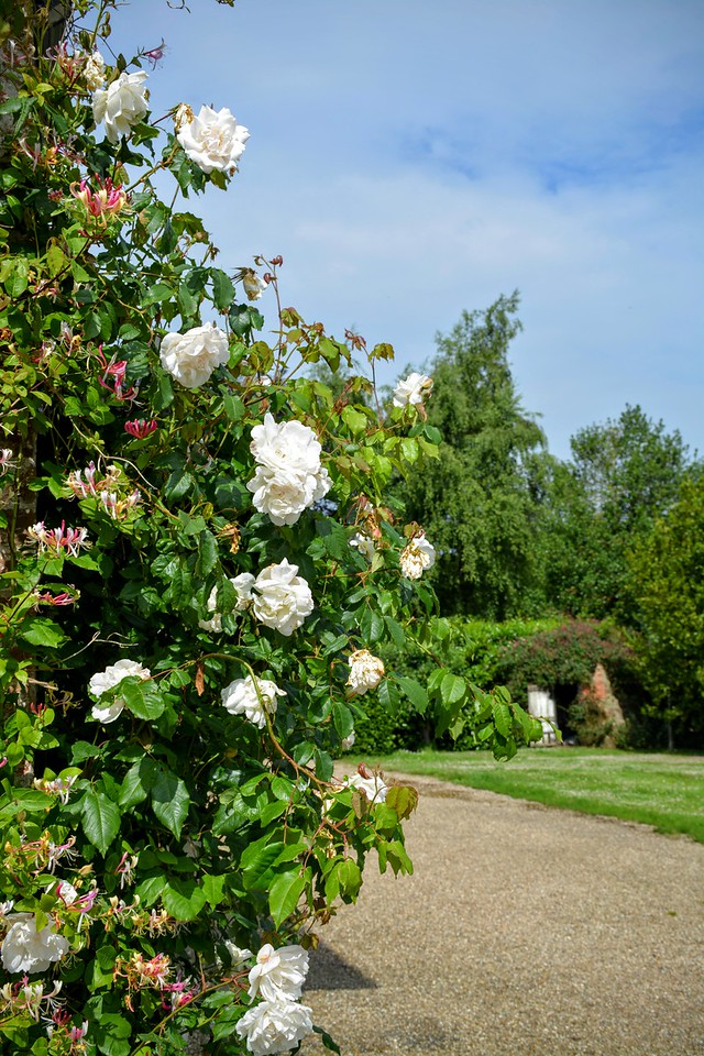 Roses at Washingford House
