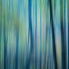 Cool Forest Abstract, Great Smoky Mountains National Park