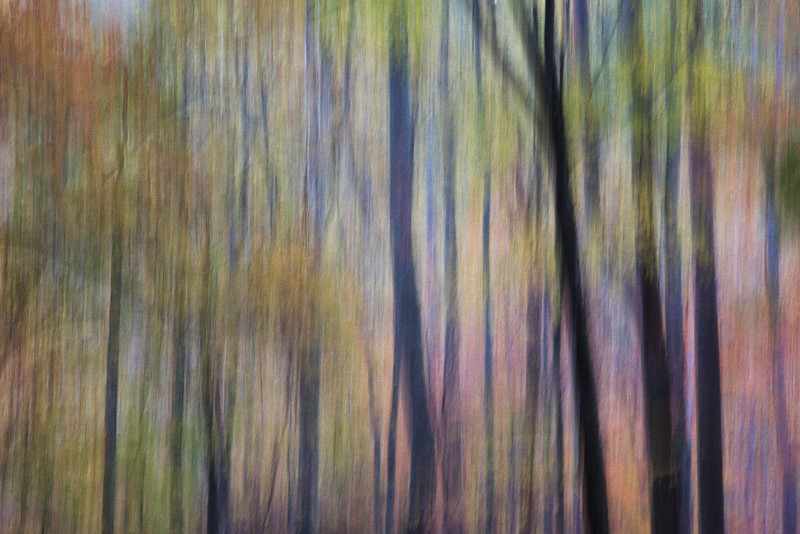 Fall Forest Abstract, GSMNP