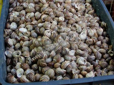 0040 Athens Snails
