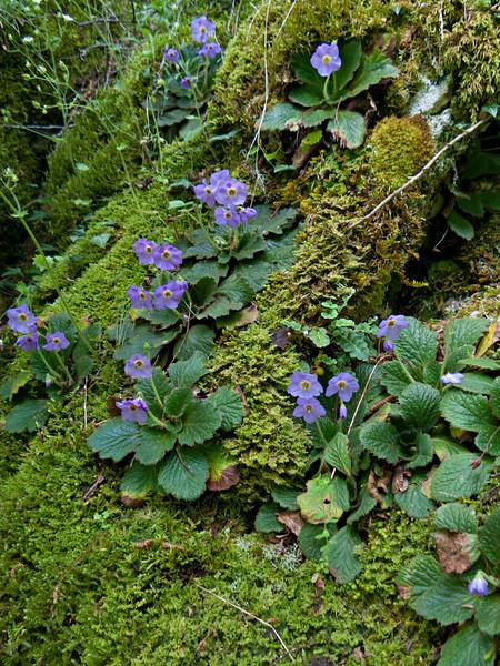 Gorge flora