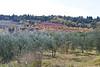111021_tuscany_0022