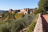 111021_tuscany_0065