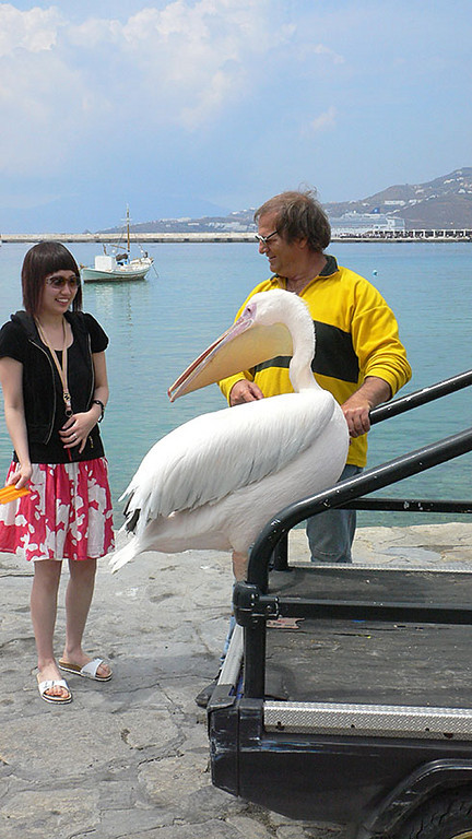 Tourists can brush the pelican for about a Euro. This tourist tried it but was quite frightened of the bird. This is the only photo from Tuesday. Unfortunately, Yan spent mot of the day sick in bed.