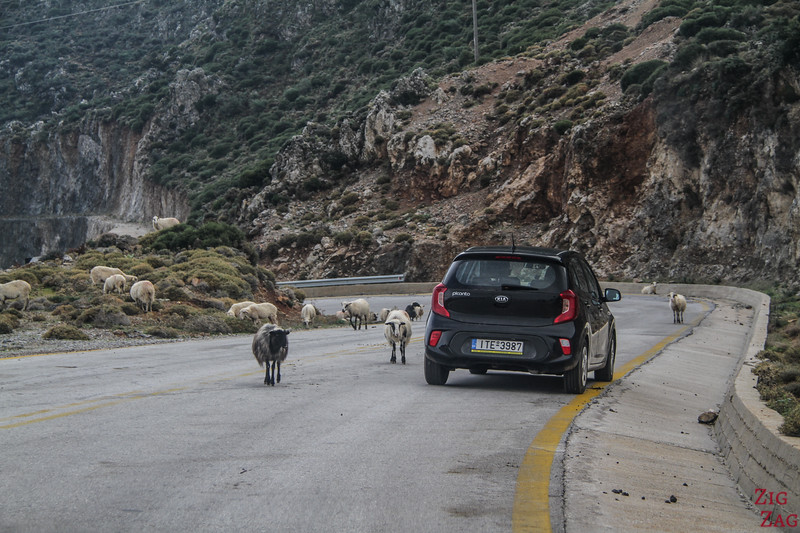 Dangers on the Cretan roads- animals