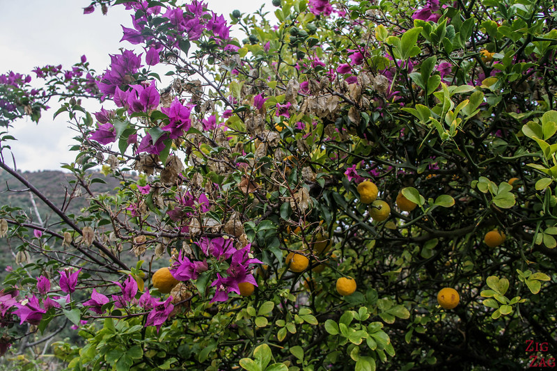 Mediterranean Fruits & Citrus Gardens of Crete Photo 3