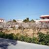 Aegina-005