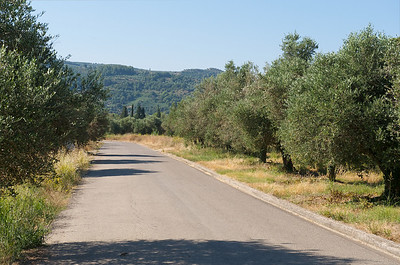 Road to ancient Olympia, lined with olive trees
