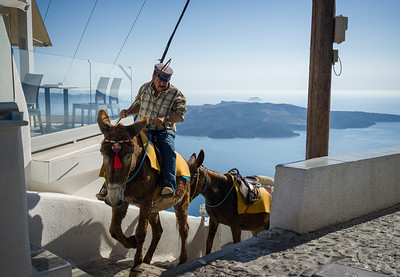Donkey Ride in Fira