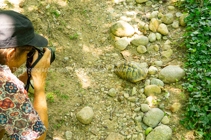 Photographing a turtle