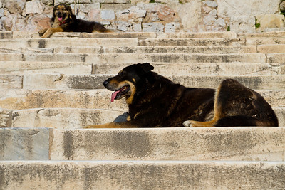 Dogs Acropolis Athens, Greece