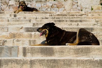 Dogs Acropolis Athens, Greece