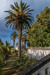 Palm Tree in Achilleion's Garden