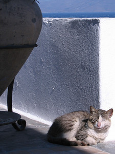 Cat napping in the sun.