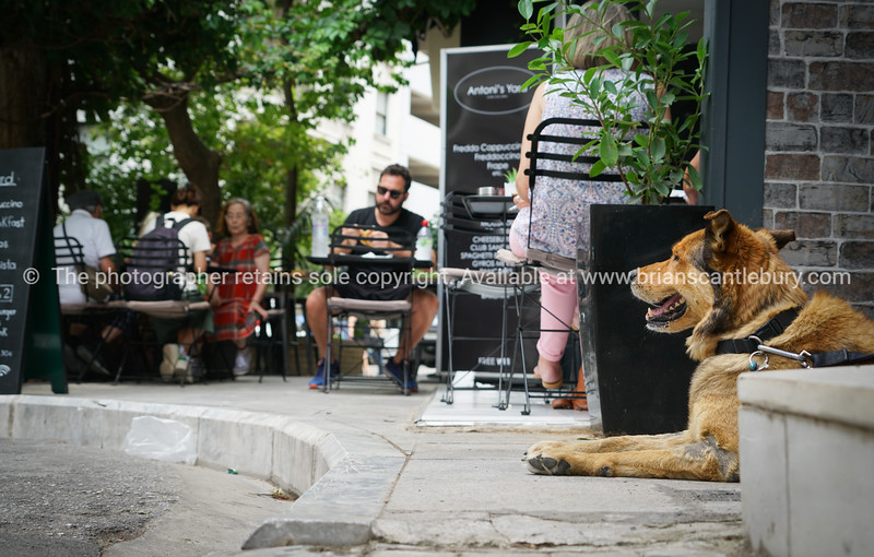 Dog waits for owner to finish coffee in Plaka district at streetside cafe.
