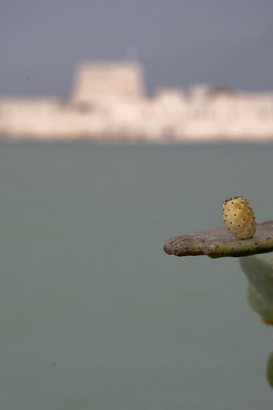 Prickly Pear & Bourtzi Fortress, Nafplion Harbor 700pix-3767