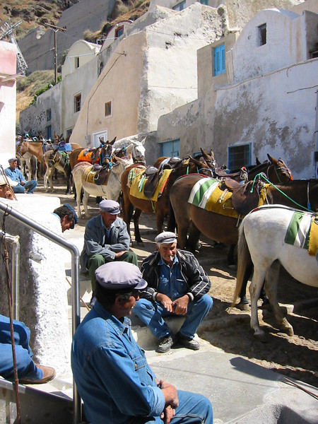 Mules available to take you back to the top, to the villages. (We were told the journey was very very uncomfortable).