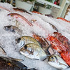 Fish on ice in Greek restaurant ready for customer selection