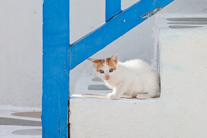 Kitten, Mykonos, Greece