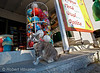 Cat at Grocery Store, Galissas, Island of Syros, Cyclade Islands, Aegean Sea, Greece