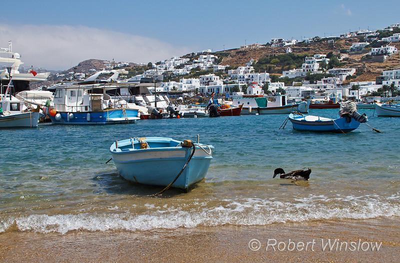 Duck in Harbor, Island of Mykonos, Cyclade Islands, Aegean Sea, Greece