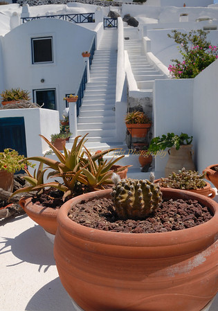 Architecture with potted garden on the side of the caldera in Santorini, Greece.