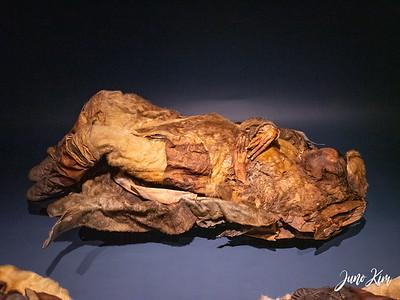Mummy from Qilakitsoq