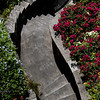 Curving Stairs with Blue Plumbageo & Red Bougainvillea