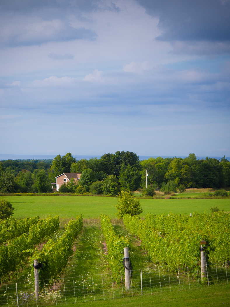 Coffin Ridge Winery, visit on an autumn color tour in Grey County.