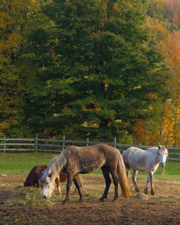 Grey County Apple Pie Trail
